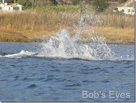 sealswithfish