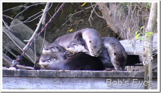 Ottersix