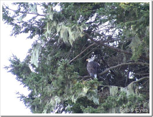 eagletree2