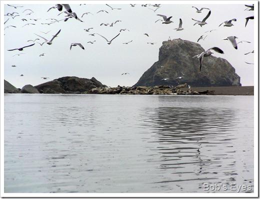 sealandbirds