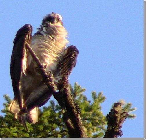 Bigbird[5]