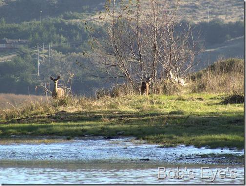 deerisland