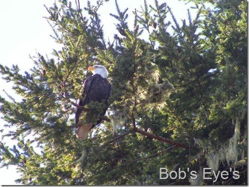eagleslanding