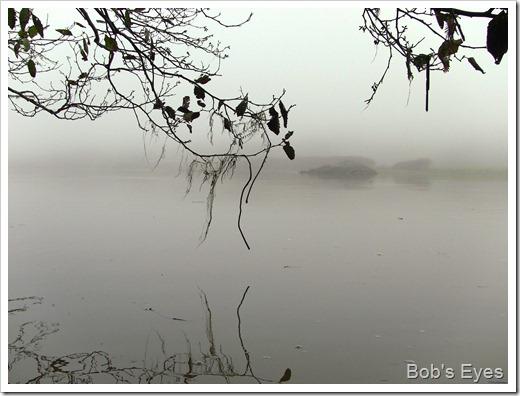 foggedin2