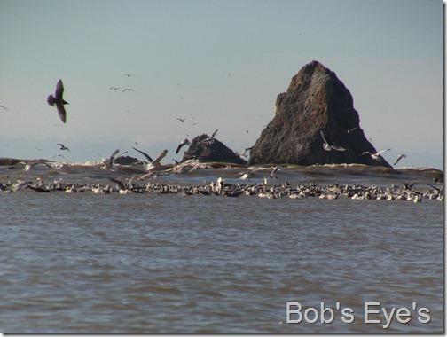 oceanbirds