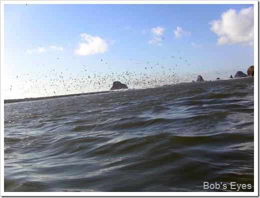 rivermouthbirds