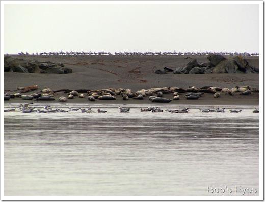 sealsbirds