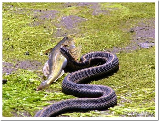 snakefishland3