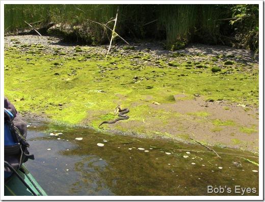snakefishland