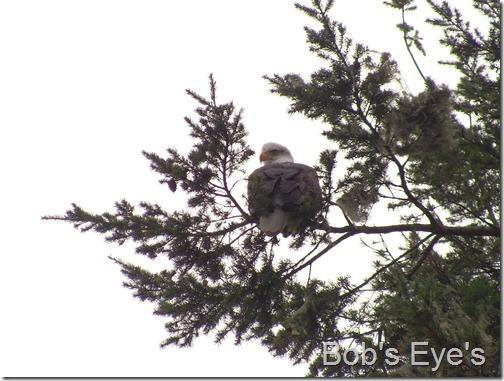 eagletree