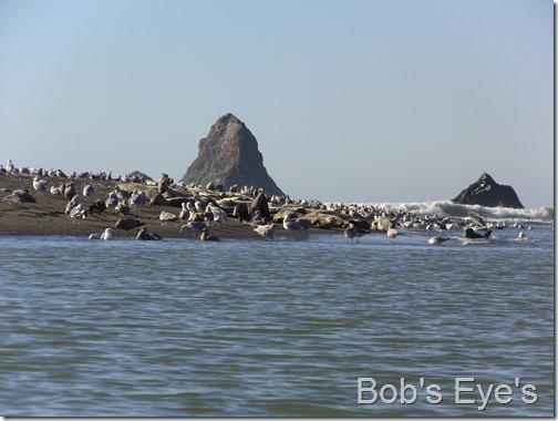 sealsandbirds