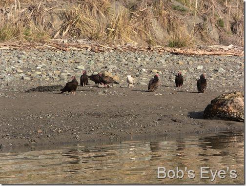 vultureseating