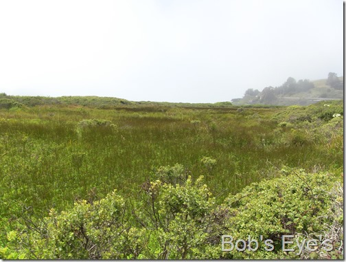 islandcenter