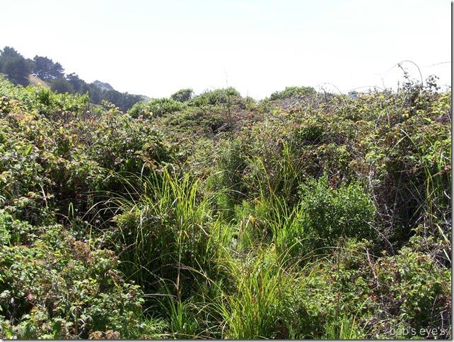 eastendbrush