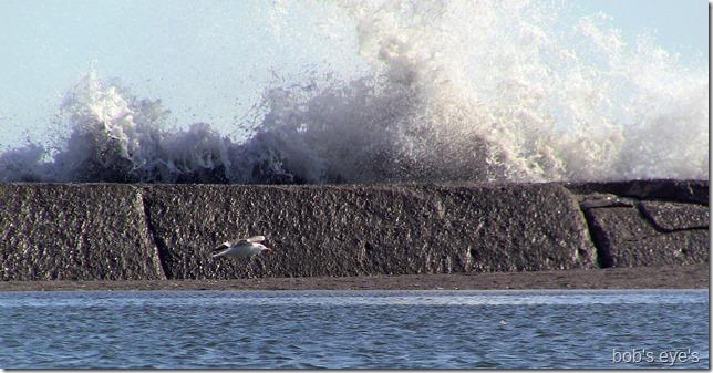 jettywave