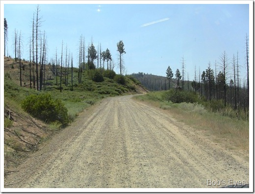 forestburn