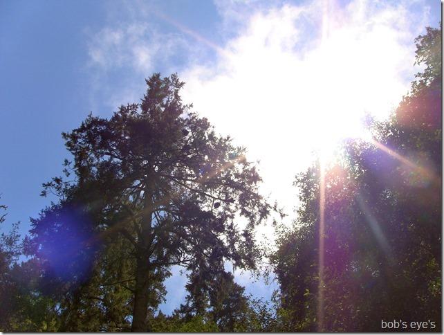 heronrookerytree