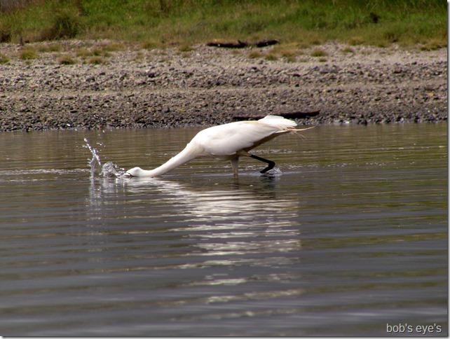 egretfishing