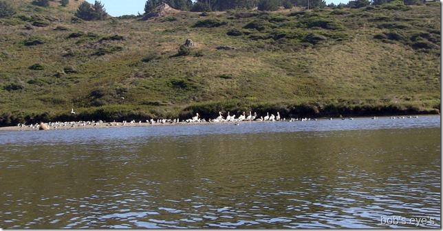 islandbirds