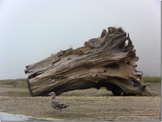 redwoodstump
