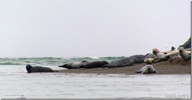 sealsmouth