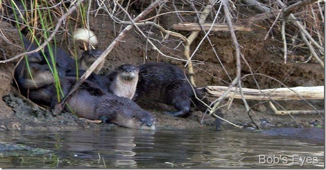 otters3