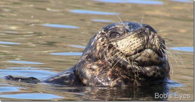 sealblack