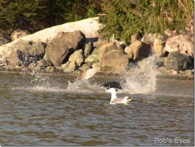 sealionbirds