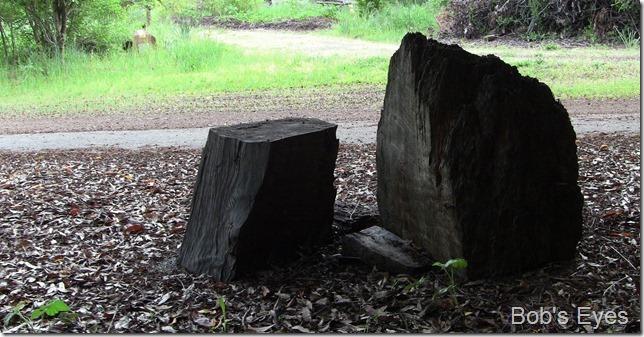 stumpwood