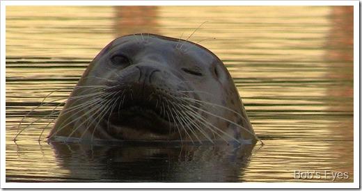 sealwink