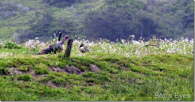turkeybirds