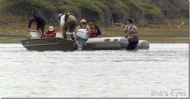 bioboats