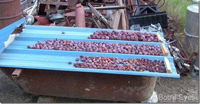 dryedfruit