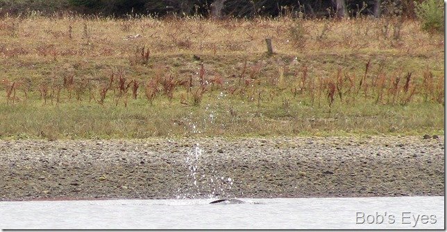 ospreydive