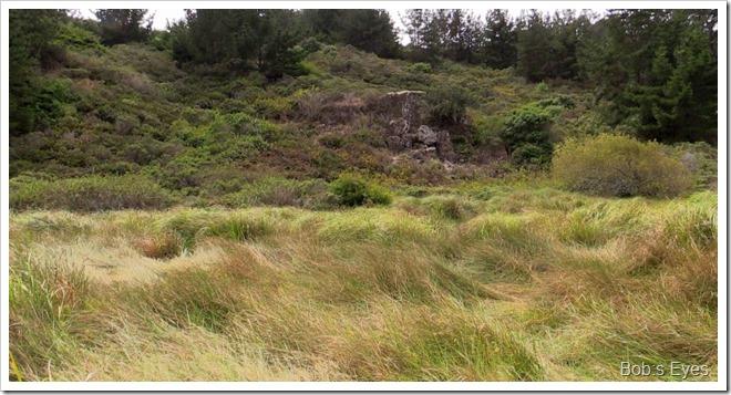 swamprock
