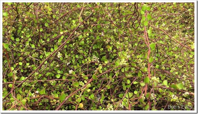 matressbush