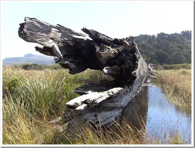 redwoodlog