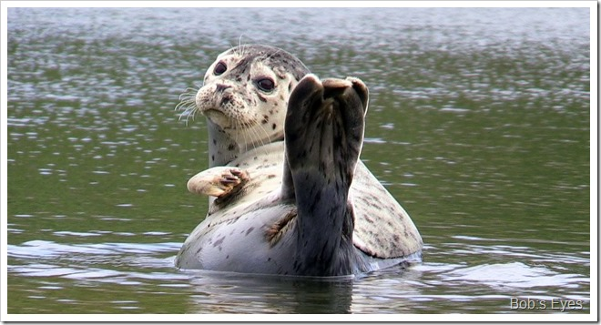 sealwhite