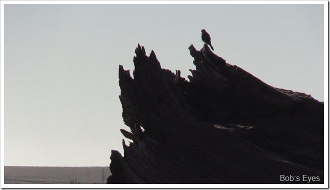 birdstump