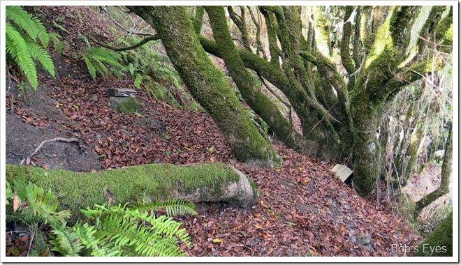 treetrail