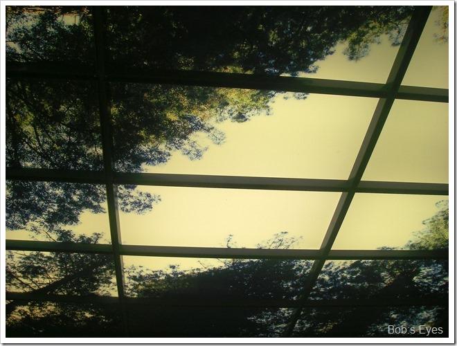 lighttree