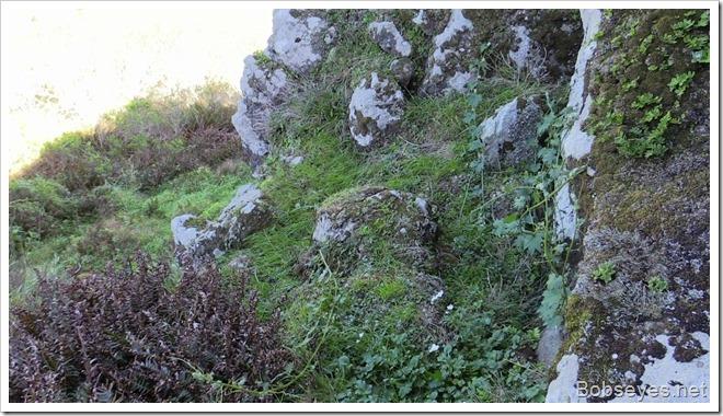 lushrock