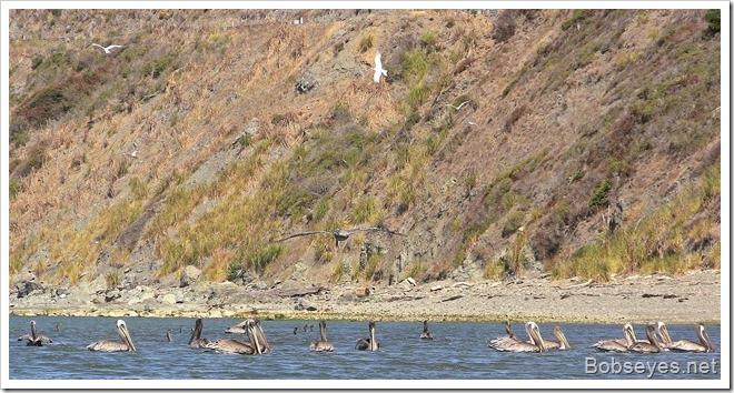 fishingbirds