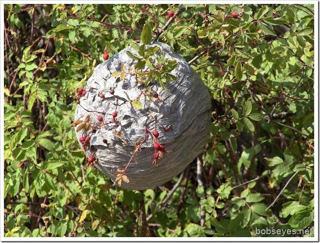 nestbee