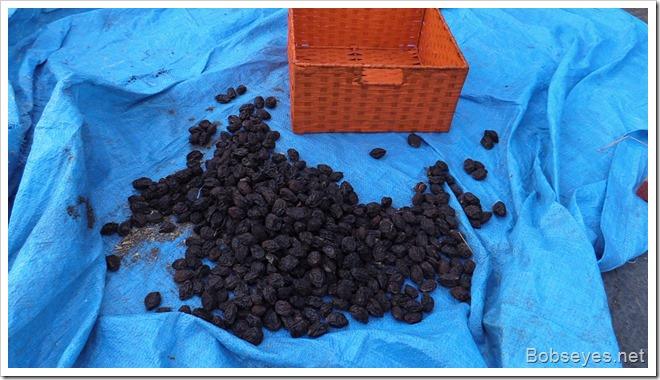 driedprunes