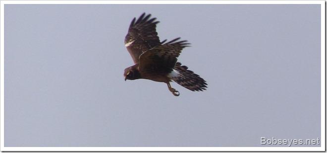 hawky2