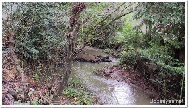 creekstump
