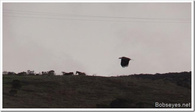 eaglehorses