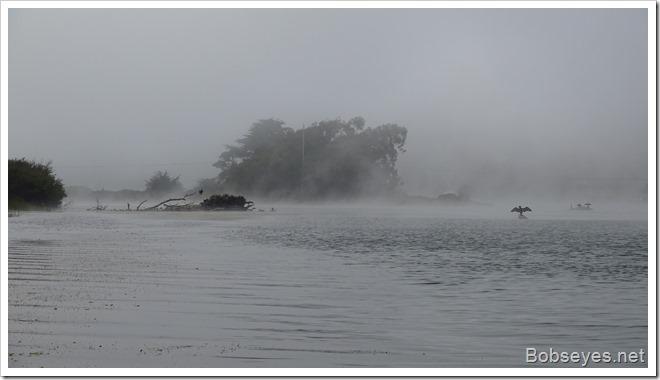 fogbirds