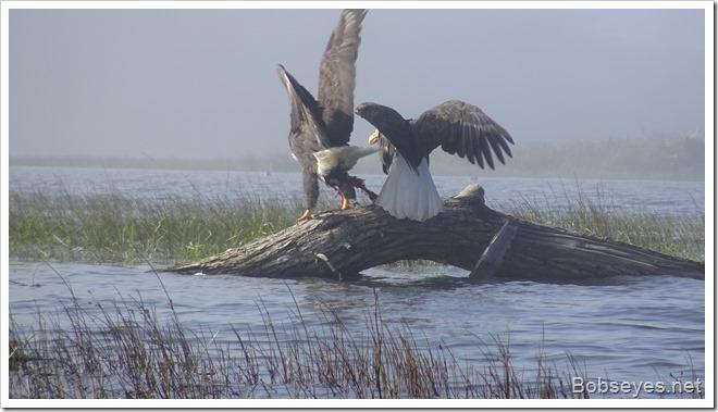 eaglegrab